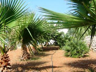 Garten Mietobjekt Haus 45348 Pescoluse