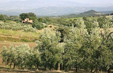 Ausblick aus der Ferienunterkunft Mietobjekt Villa 55549 Roccastrada