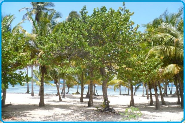 Strand Mietobjekt Ferienunterkunft auf dem Land 71841 Sainte Anne (Guadeloupe)