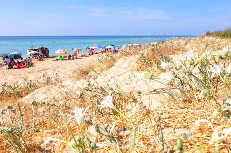 Ausblick aus der Ferienunterkunft Mietobjekt Villa 114625 Pescoluse