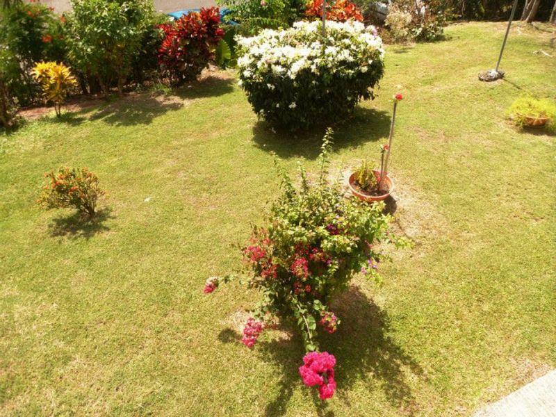 Garten Mietobjekt Appartement 25506 Gosier (Guadeloupe)