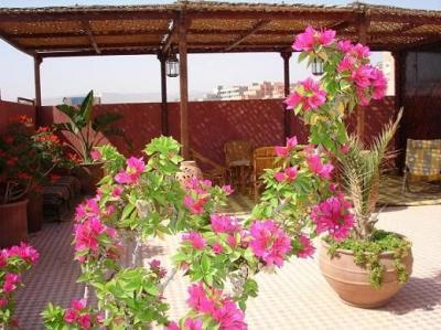 Ausblick von der Terrasse Mietobjekt Appartement 27835 Agadir