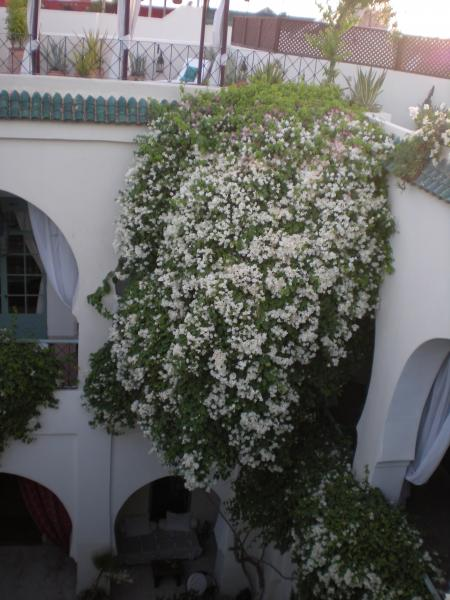 Ausblick von der Terrasse Mietobjekt Fremdenzimmer 45751 Marrakesch