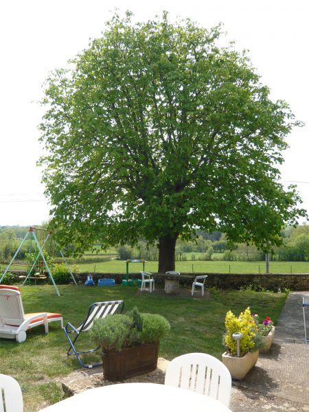Garten Mietobjekt Ferienunterkunft auf dem Land 51135 Saint-Cirq-Lapopie