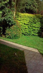 Garten Mietobjekt Haus 61332 Sainte-Rose