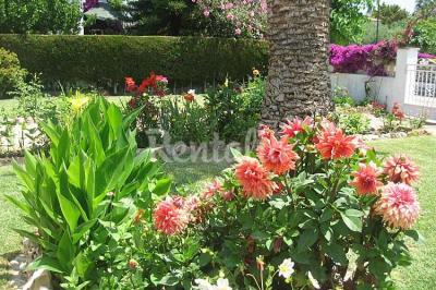 Garten Mietobjekt Chalet 61565 Torredembarra