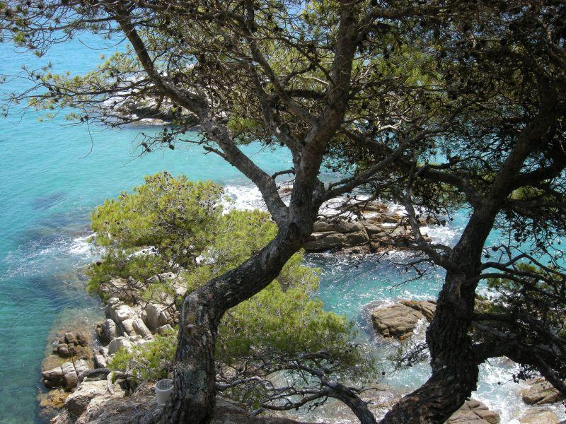 Ausblick aus der Ferienunterkunft Mietobjekt Appartement 98168 Sant Antoni de Calonge