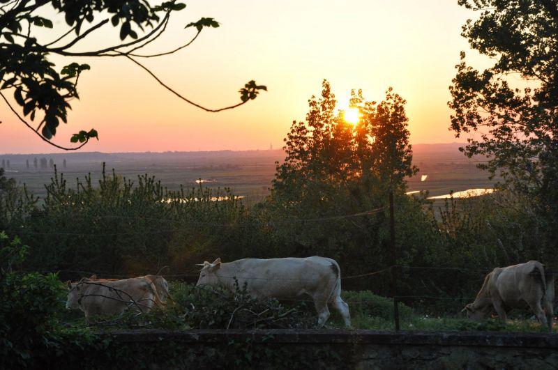 Ausblick aus der Ferienunterkunft Mietobjekt Wohnwagen 113283 Rochefort sur Mer