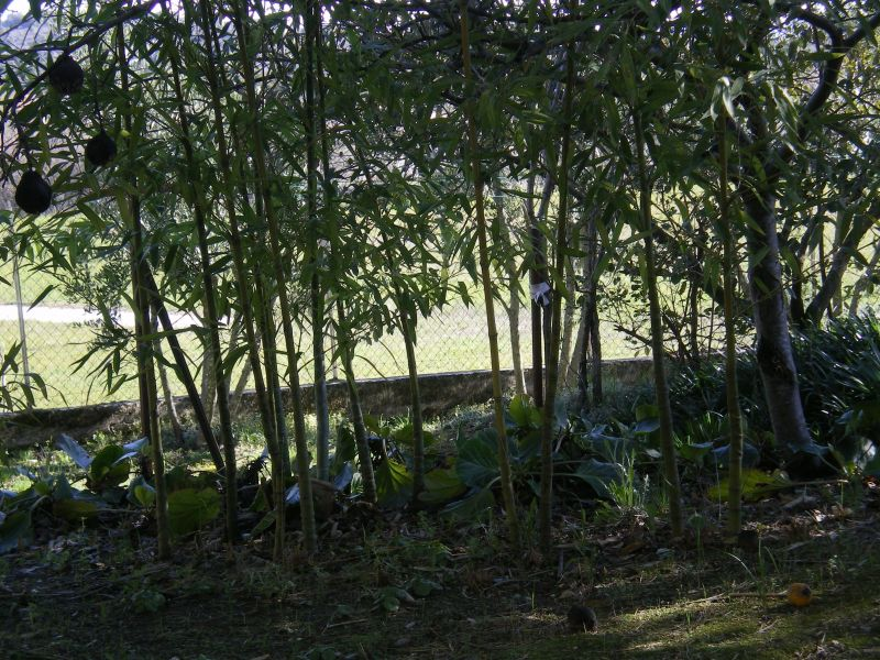 Garten Mietobjekt Ferienunterkunft auf dem Land 113811 Saint Ambroix